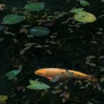 モネの池(根道神社の池)3