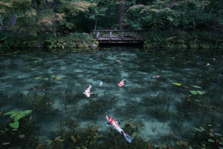 岐阜県「モネの池(根道神社の池)」の行き方と撮影スポット
