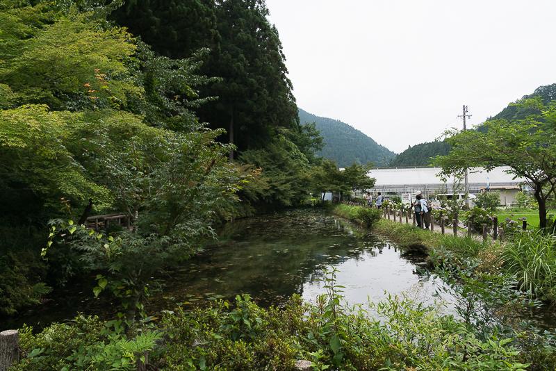 モネの池撮影スポット