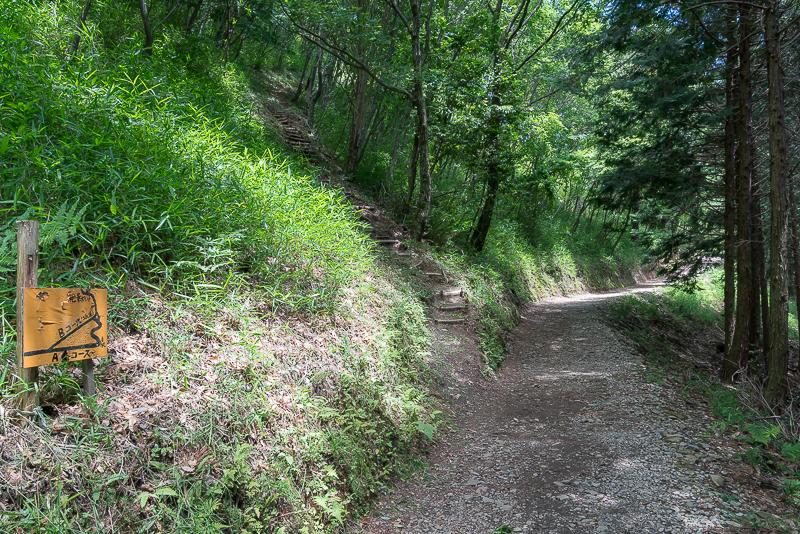 天空の茶畑(岐阜のマチュピチュ)分岐路