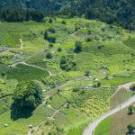 天空の茶畑(岐阜のマチュピチュ)2