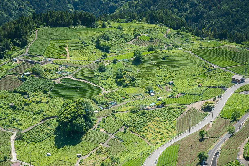 天空の茶畑(岐阜のマチュピチュ)
