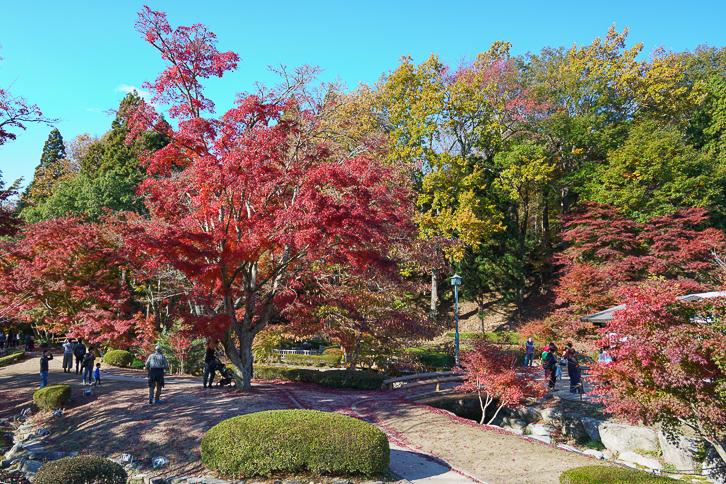曽木公園(逆さ紅葉)」1