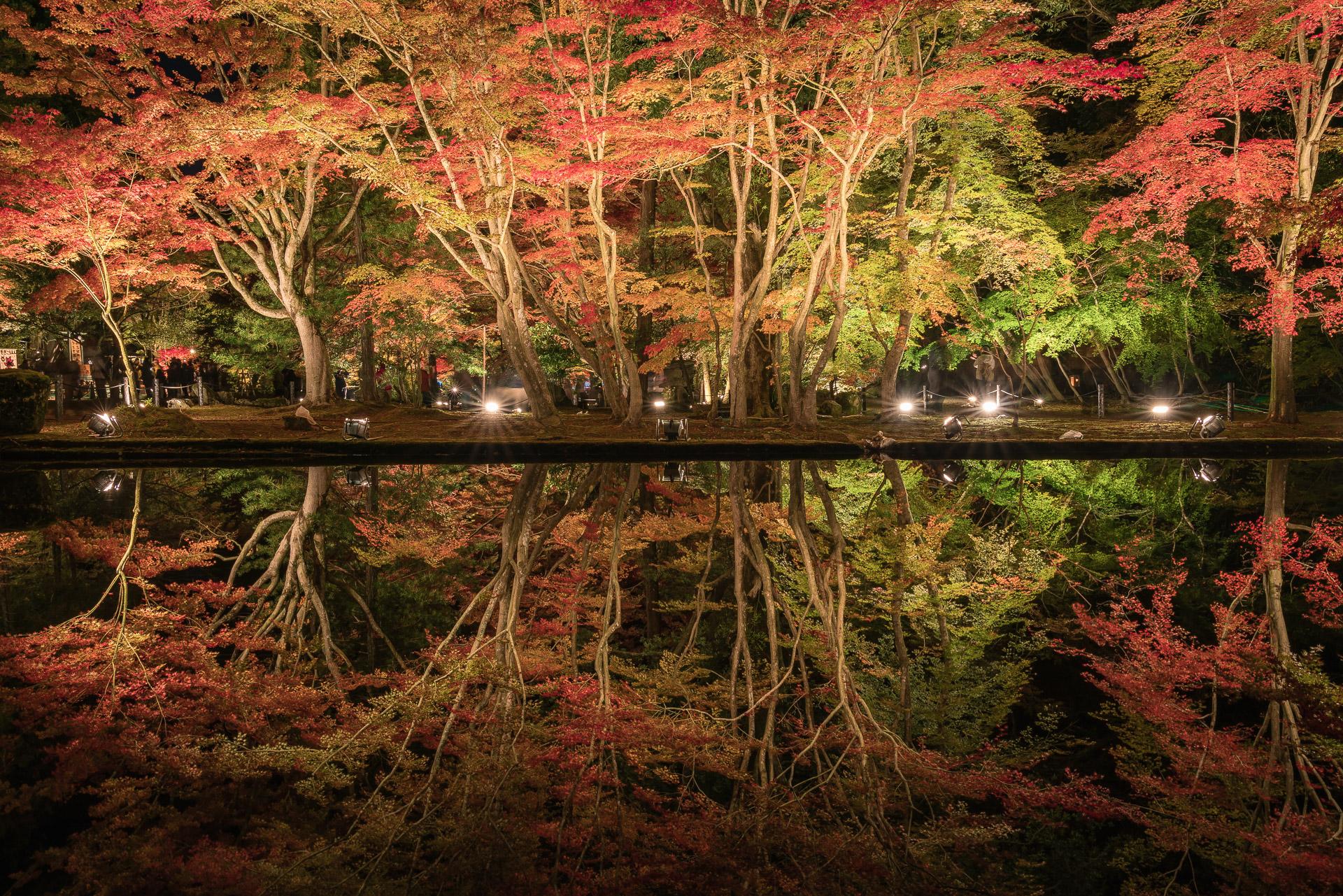 岐阜県土岐市の「曽木公園(逆さ紅葉)」に行ってきました!ライトアップ期間は正に絶景