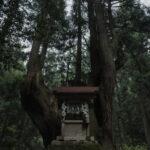 株杉の森(21世紀の森公園)1