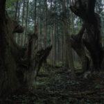 株杉の森(21世紀の森公園)5