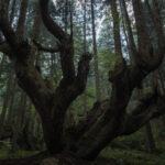 株杉の森(21世紀の森公園)2
