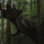 株杉の森(21世紀の森公園)8