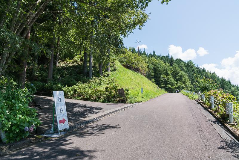 株杉の森(21世紀の森公園)分岐路