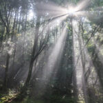 岐阜県山県市「円原川の光芒」の行き方と撮影スポット