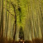 嵐山(花灯路)8