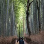 嵐山(花灯路)3