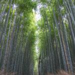 嵐山(花灯路)2