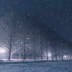 滋賀県高島市「メタセコイア並木」の行き方と撮影スポット