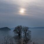 湖北水鳥公園(水中木)1