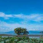 湖北水鳥公園(水中木)8