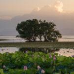湖北水鳥公園(水中木)7