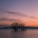 湖北水鳥公園(水中木)4