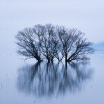 湖北水鳥公園(水中木)2