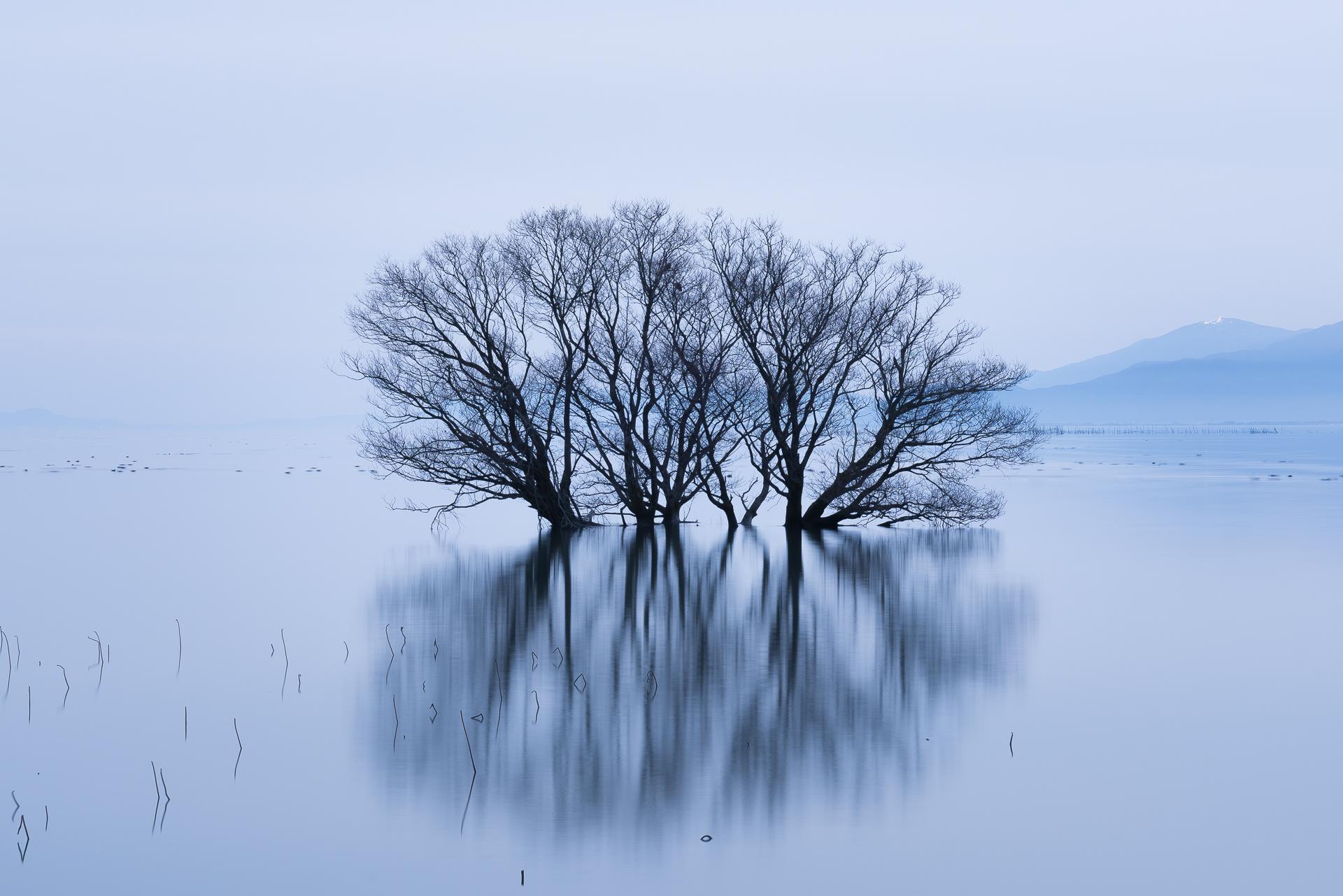 滋賀県長浜市「湖北水鳥公園(水中木)」の行き方と撮影スポット