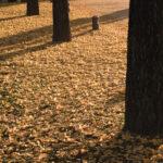 学びの森(冬ソナストリート)3