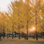 学びの森(冬ソナストリート)2