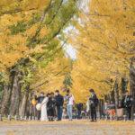 学びの森(冬ソナストリート)5