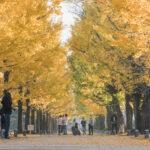学びの森(冬ソナストリート)4