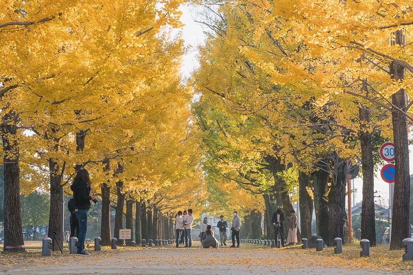 学びの森(冬ソナストリート)