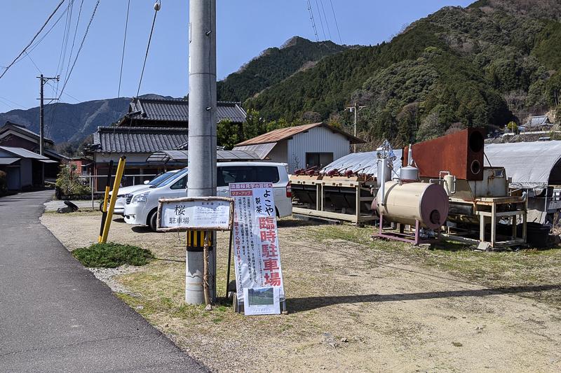 淡墨桜(美杉町竹原)よこや製茶駐車場