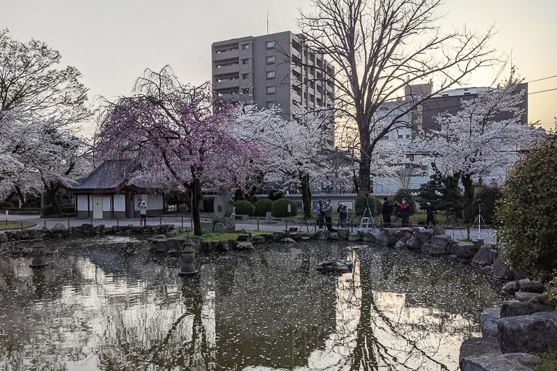 日中友好庭園 撮影スポット