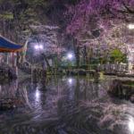 日中友好庭園1
