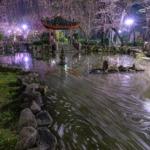 日中友好庭園3