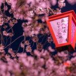 水門川(夜桜)4