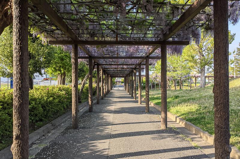 赤坂スポーツ公園撮影スポット
