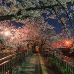 水門川(夜桜)3