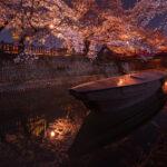 水門川(夜桜)2