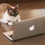 「WordPress管理画面へのログイン処理が拒否されました」と表示された時の対処法