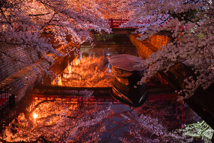 水門川(夜桜)